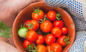 Ya casi llega el Mercado Agroecológico UTP